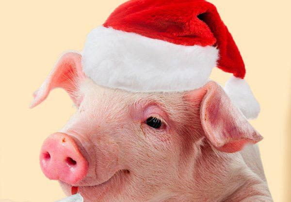 god svinji 3