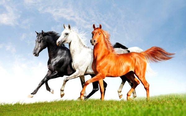 kartinki24 ru horses 189