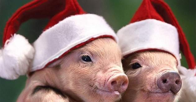 Картинки по запросу картинки что подарить год свиньи знакам зодиака