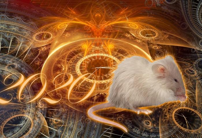 Картинки по запросу Как повлияет 2020 год Металлической Крысы на самые упёртые знаки Зодиака
